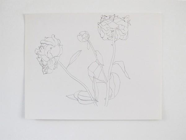 Frondaison #02 50x65, encre de chine sur papier canson.